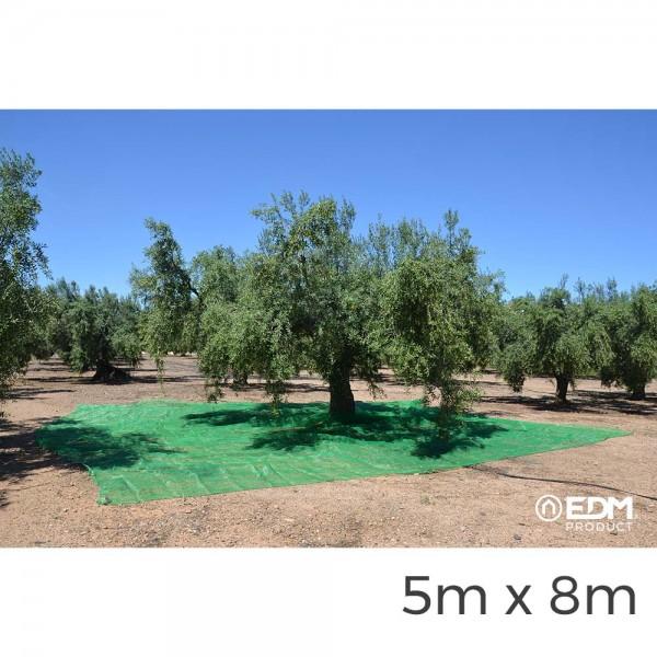 Manto para recoleccion verde aceituna 5x8m